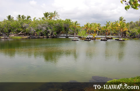 Located at Mauna Lani Resort grounds