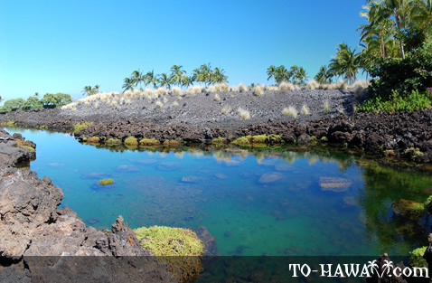 Brackish water lava pools