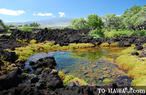 Waikoloa Anchialine Ponds