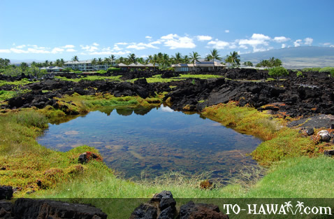 Located at Waikoloa Beach Resort