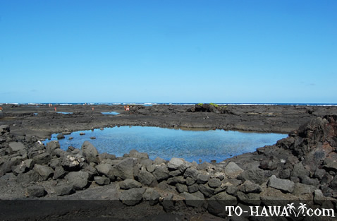 Surrounded by lava rocks and tide pools