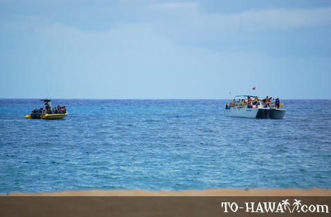 Hawaii dolphin watching tour boats
