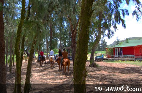 Horseback Riding on Oahu's north shore