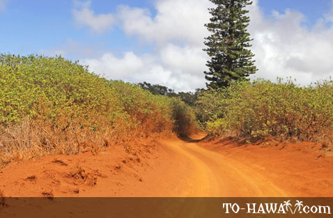 Typical dirt road on Lanai