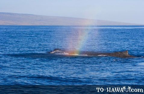 Whale and rainbow