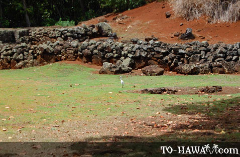 Small bird inside the heiau