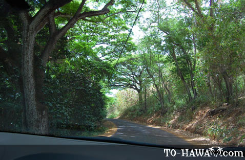 Narrow road to Anahola Beach