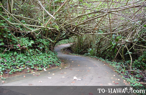 Paved path from Hanalei Bay Resort