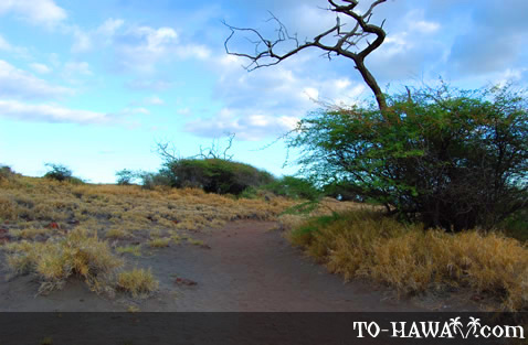Trail to Pu'u Pehe
