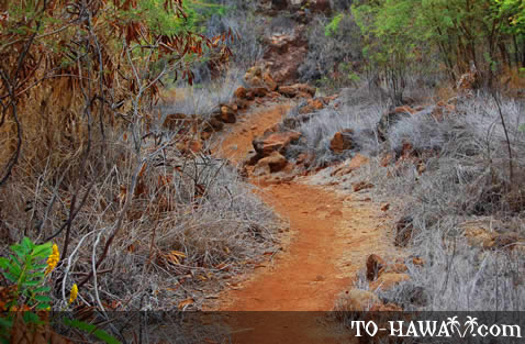 Follow the trail to Huawai Bay