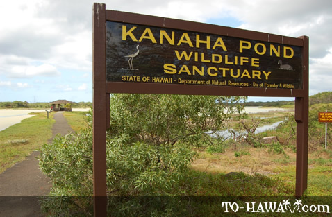Kanaha Pond Wildlife Sanctuary