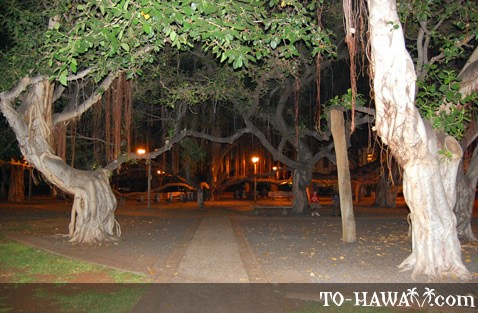 Lahaina banyan tree at night