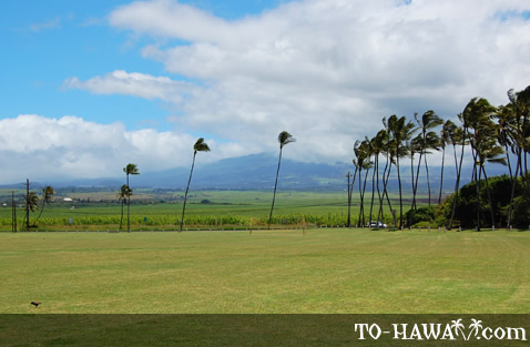 View to Haleakala from the park