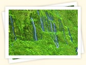 Of maui s lesser known waterfalls in fact as many as 17 waterfalls are