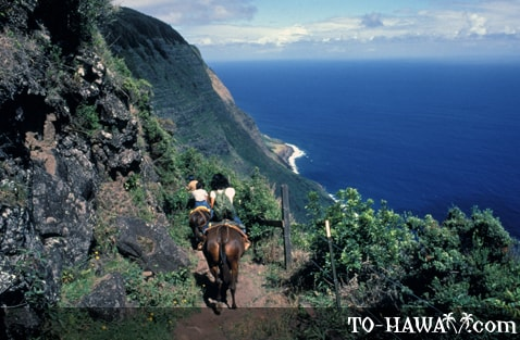 Kalaupapa mule riding tour