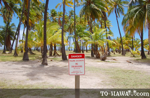 'Beware of falling coconuts' sign