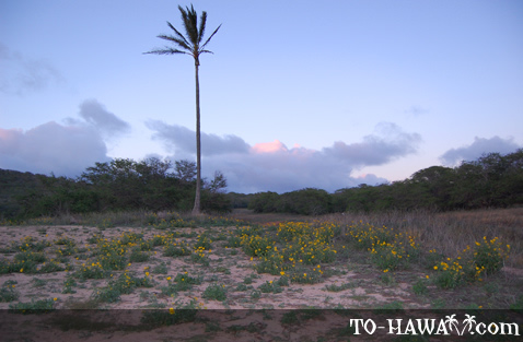 West Molokai vegetation