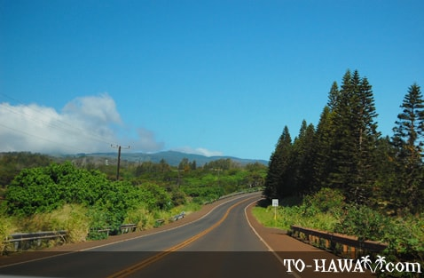 Farrington Avenue Molokai