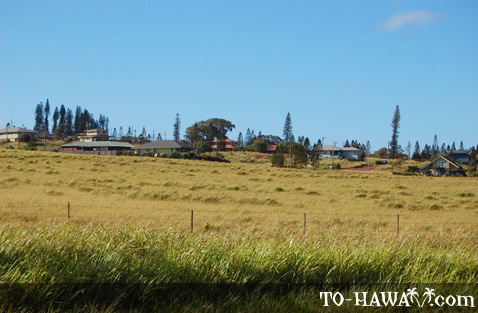 Small town in upcountry Molokai