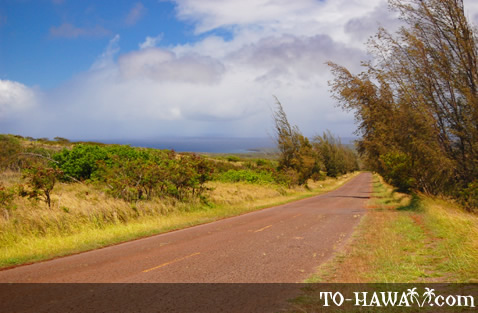 Scenic road on Molokai