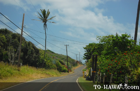 Winding road on Molokai