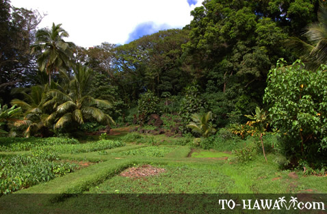 Tropical garden in the heiau