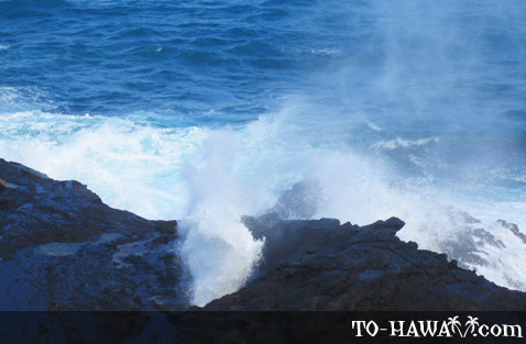 The blowhole in action