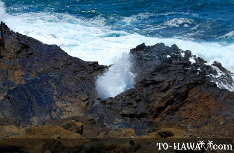 Water shoots up the blowhole