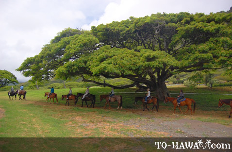Horseback riding on Oahu