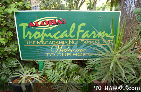 Tropical Farms Macadamia Nut Farm