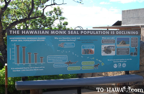 Monk seal info sign