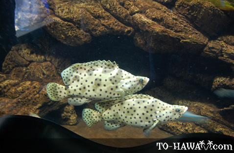 Dotted tropical fish