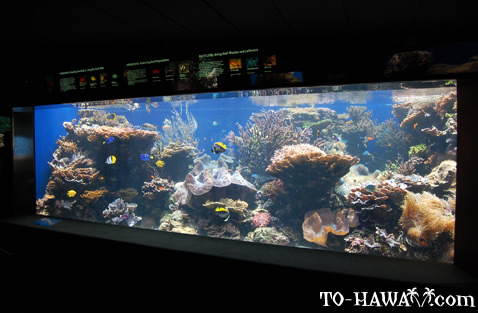 Large aquarium in Waikiki