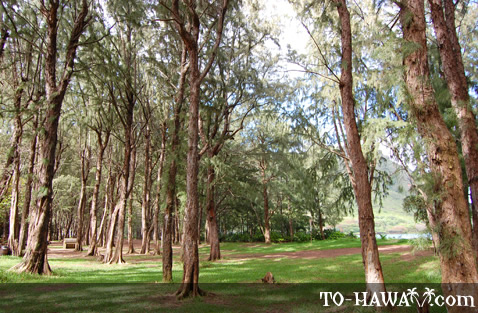 Kahana Beach forest