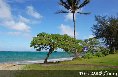Beach park in Punalu'u