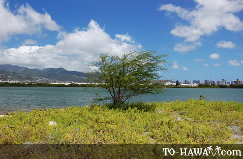 Tree overlooking the city of Honolulu