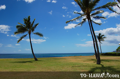 Ma'ili Beach palm trees