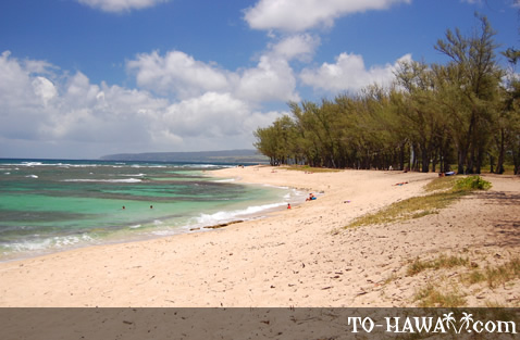 Beach on Oahu's north shore