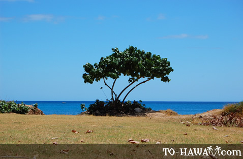 Beachfront tree