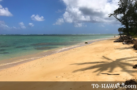 Beach on Oahu's Windward Coast