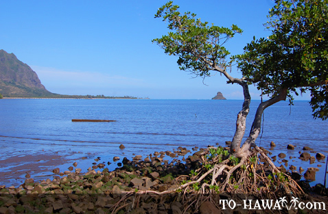 Lonely tree overlooking Chinaman's Hat