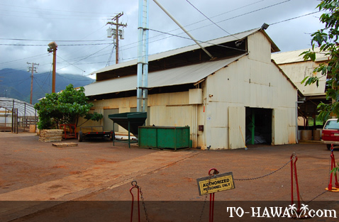 Waialua Estate farm tour
