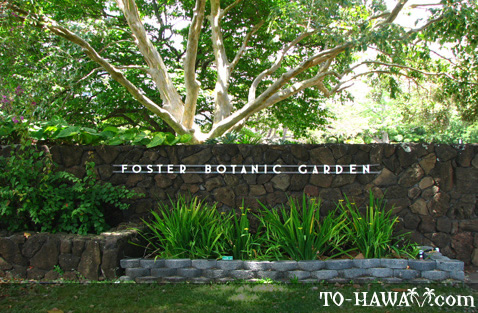 Pretty Flowers Picture Of Foster Botanical Gardens Honolulu