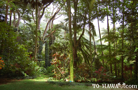 Manoa rainforest