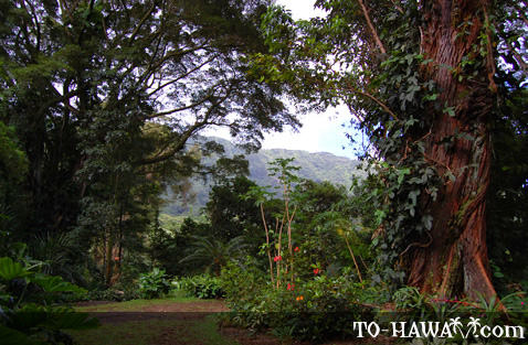 Tropical rainforest on Oahu