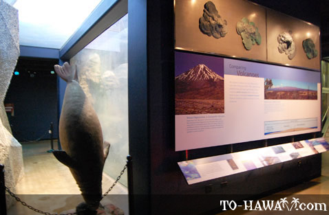Hawaiian volcanoes exhibit