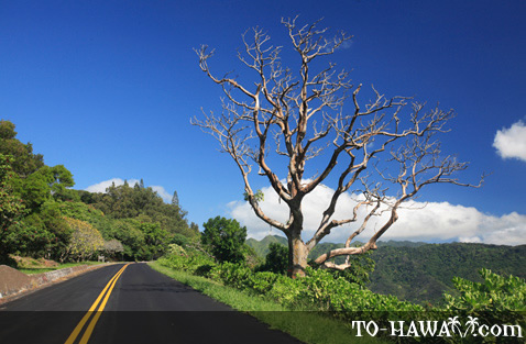 Tantalus - Round Top Drive on Oahu