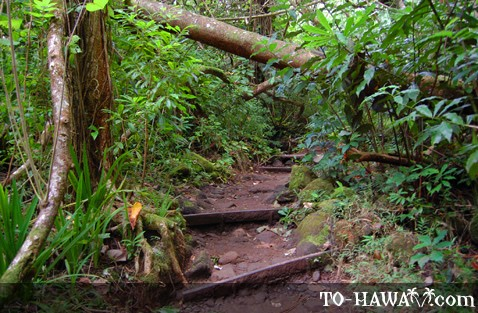 Trail in Manoa Falls